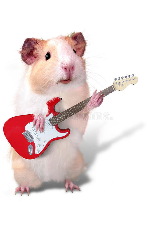 guinea pig with guitar2.jpg